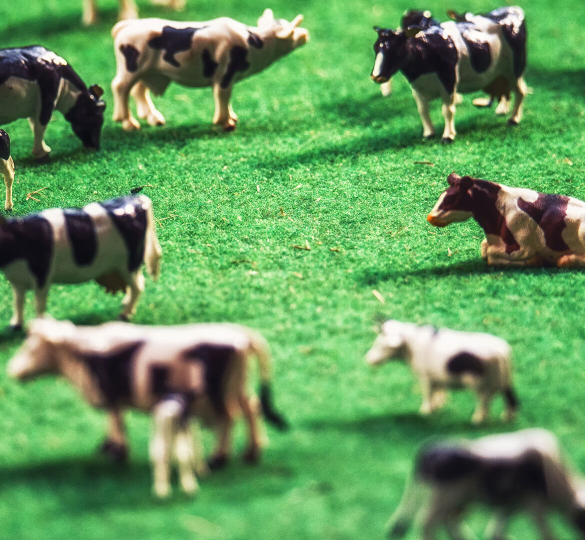 A bull market for artificial animal products? | Dolfin